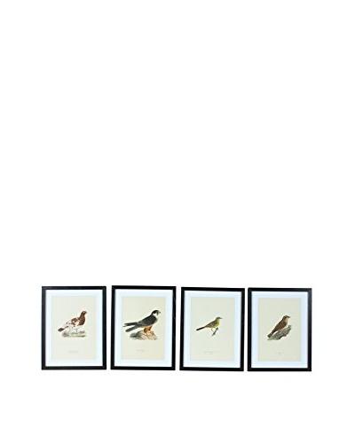 Set of 4 Framed Antique Swedish Bird Prints