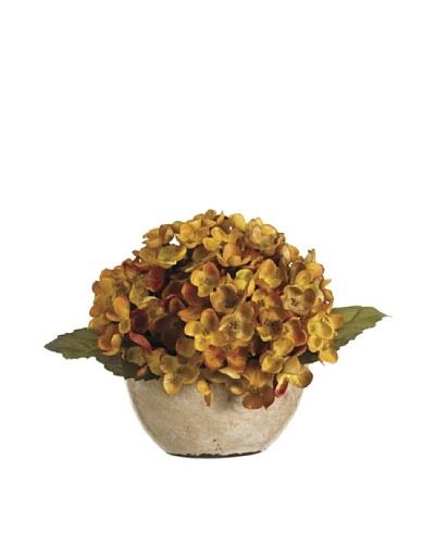 Hydrangea in Terra Cotta Pot