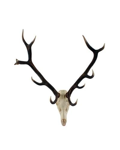 German Deer Scull & Antlers, Brown/White/Black