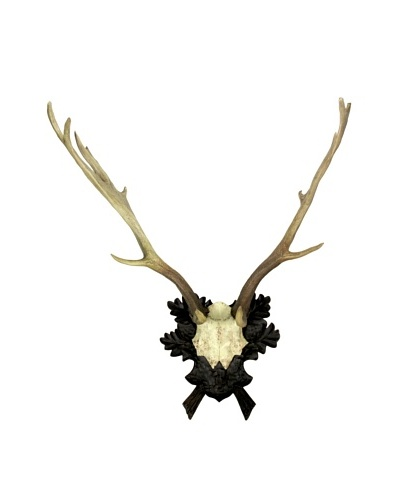 Fallow Deer Antler Wall Plaque