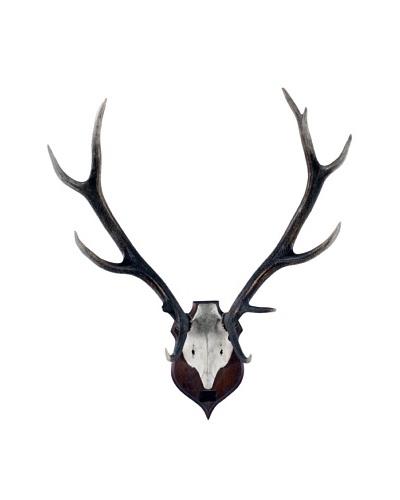 German Deer Antlers, 1953, Brown/White
