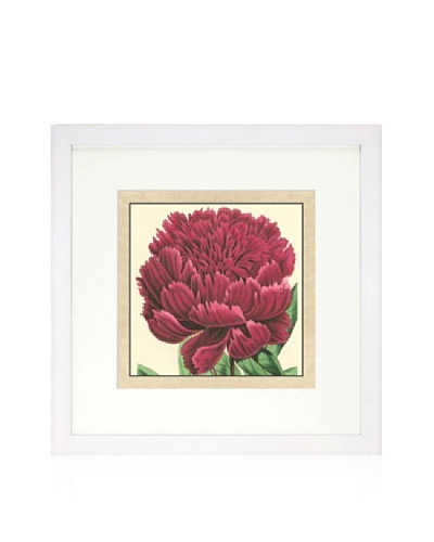 Small Peony Collection V, White/White