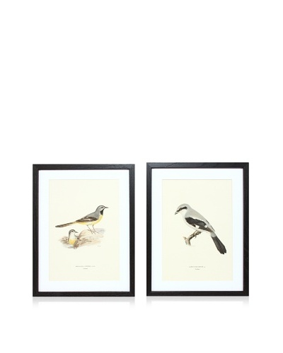 Wright Brothers Bird Prints, C. 1920, Pair