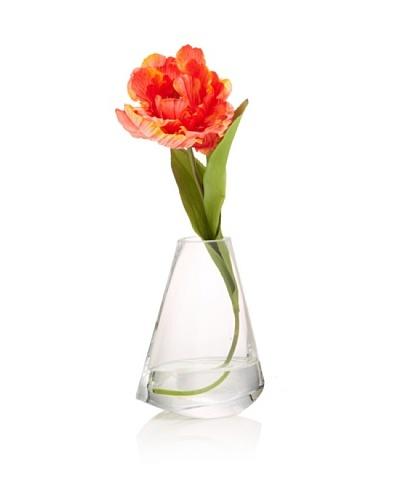Orange Tulip in Water