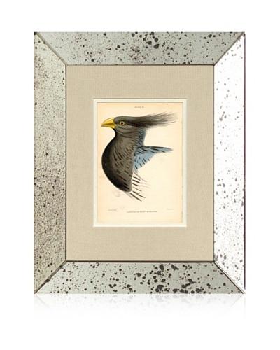 1854 Mirror Frame Bird Print II