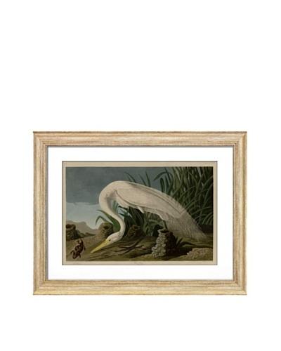 Audubon White Heron