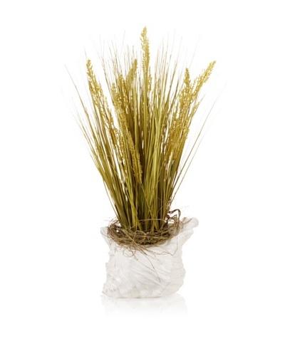 Conch Shell & Grass