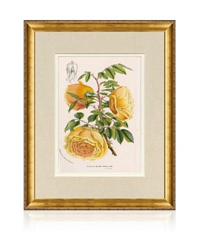 1873 Antique Botanical Print VIII, Ornate Gold