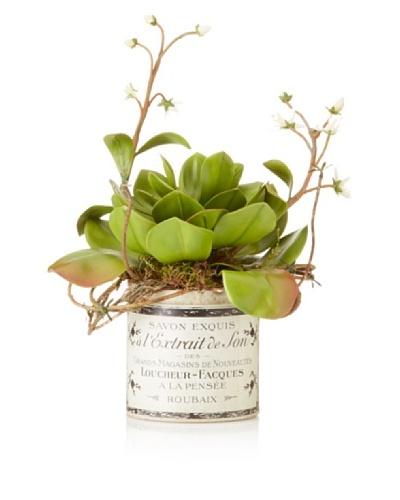 Echeveria Vine in French Pot