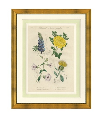 1837 Antique Hand Colored Yellow Botanical Print II, French Mat