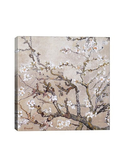 Vincent Van Gogh's Almond Branches In Bloom, San Remy (C.1890) Giclée Canvas Print