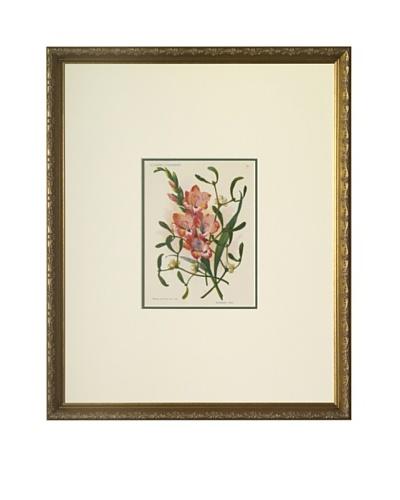 1920 Les Fleurs a l'Aquarelle Gladiolus