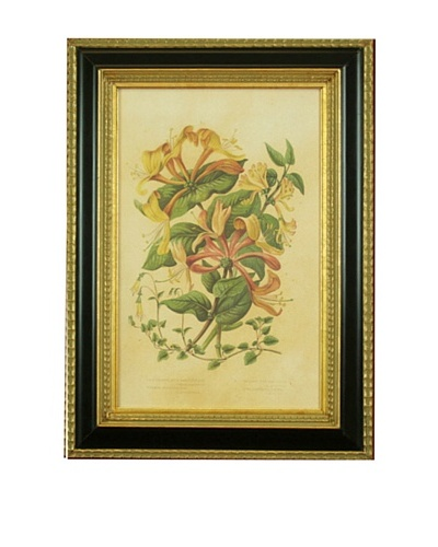 Framed Reproduction Botanical Art Print