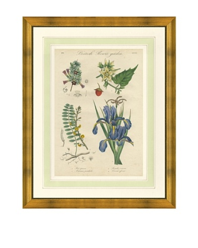 1837 Antique Hand Colored Purple Botanical Print, French Mat