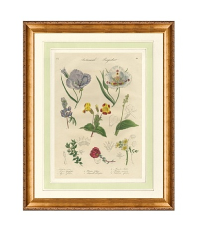 1837 Antique Hand Colored Lavender Botanical Print III, French Mat