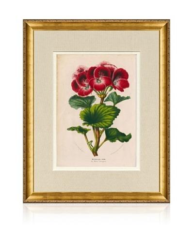 1873 Antique Botanical Print VII, Ornate Gold