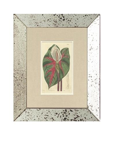 1825 Antique Hand Colored White Botanical, Mirror Frame