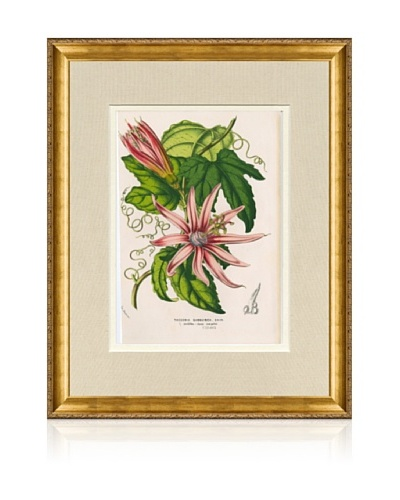 1873 Antique Botanical Print X, Ornate Gold