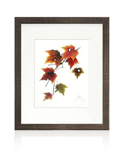 Maple Tree, Brown/White