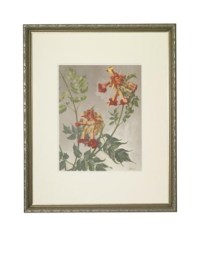 1903 Virginia Jasmine Botanical Chromolithograph