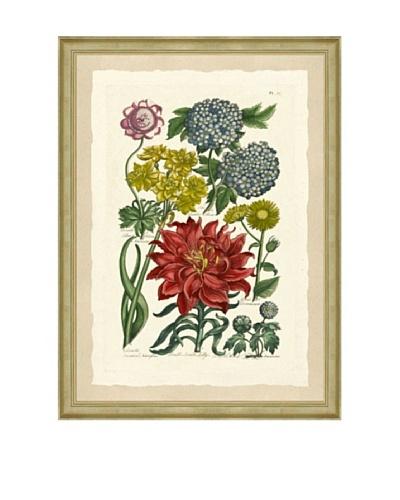 Colorful Botanical Framed Giclée Print