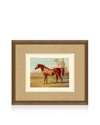 1879 Equestrian Print VI