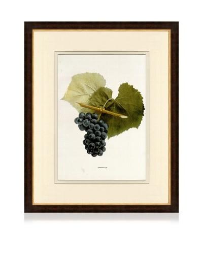 Antique Grape Print IV, 1901