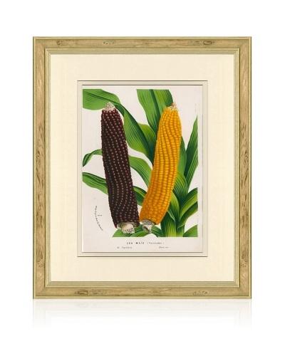 Antique Corn Print, 1873