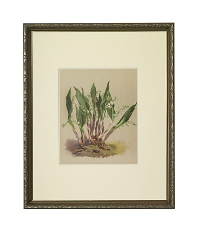 1903 Lily of the Valley Botanical ChromolithographAs You See