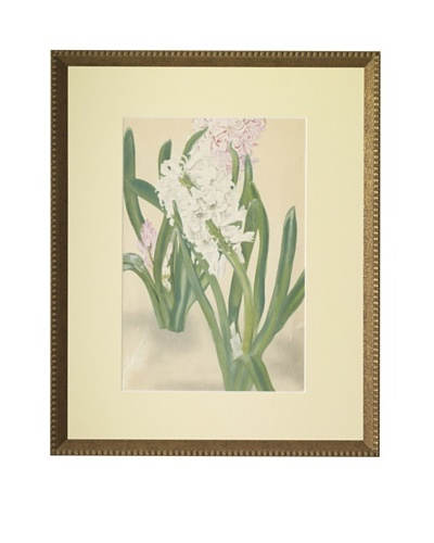 1929 Botanical Japanese Woodblock Hyacinths
