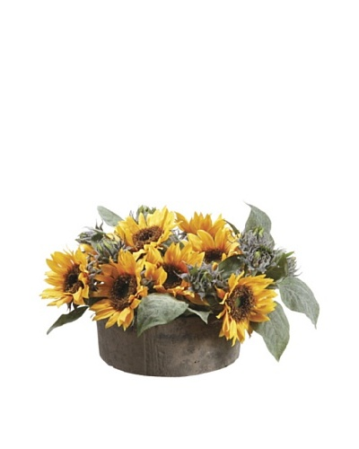 Sunflower with Bud in Clay Pot