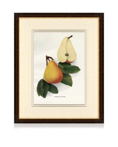 Antique Pear Print IV, 1901