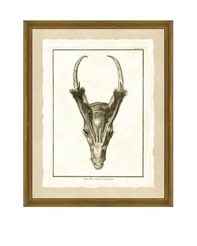 Skull Giclée Print