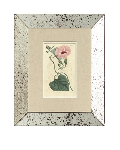 1813 Antique Hand Colored Pink Botanical III, Mirror Frame