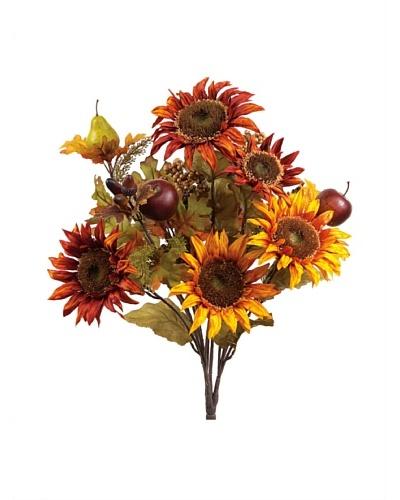 Sunflower, Apple & Pear Bush