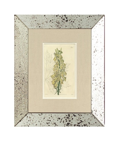 1825 Antique Hand Colored Yellow Botanical, Mirror Frame