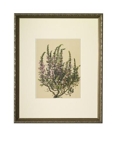 1903 Heath Botanical Chromolithograph