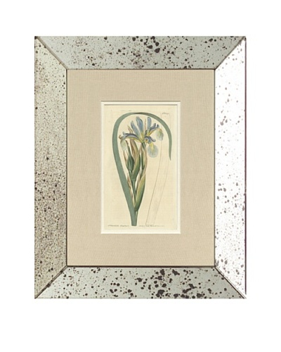 1812 Antique Hand Colored Blue Botanical, Mirror Frame