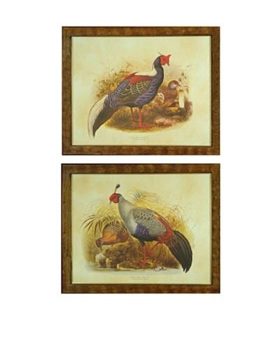 Set of 2 Framed Pheasant Illustrations