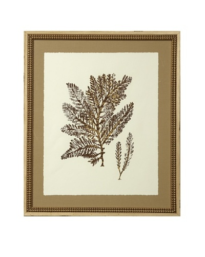 "Gold Leaf Sea Fan Print with Rustic Beaded Wood Frame, Gold/Cream, 26"" x 22"""