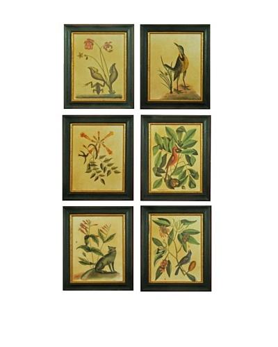 Set of Six Framed Reproduction Natural History Prints