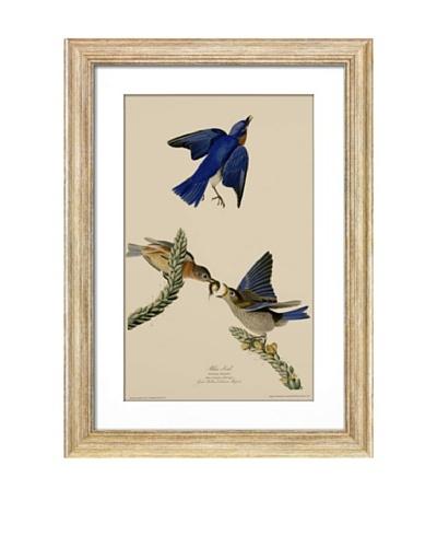 Blue BirdAs You See