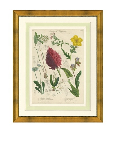 1837 Antique Hand Colored Red Botanical Print IV, French Mat