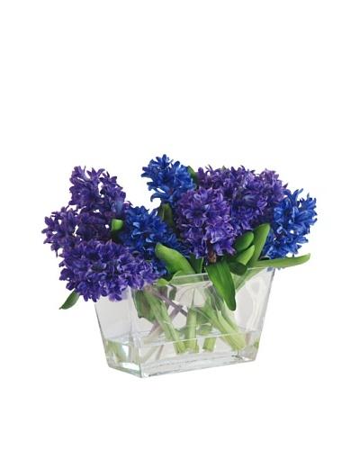 Hyacinth in Glass Vase, Blue/Purple