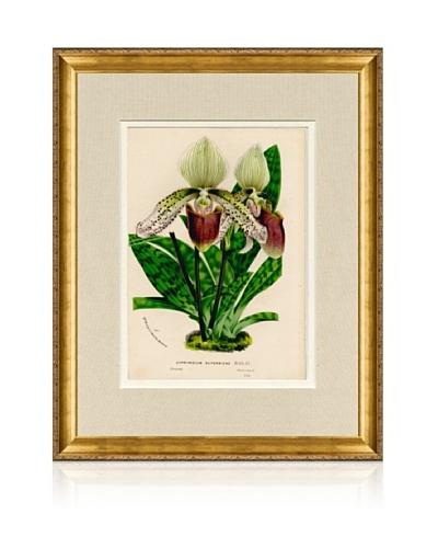 1873 Antique Botanical Print III, Ornate Gold