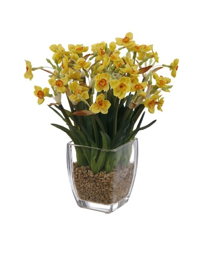 Potted Narcissus, Yellow