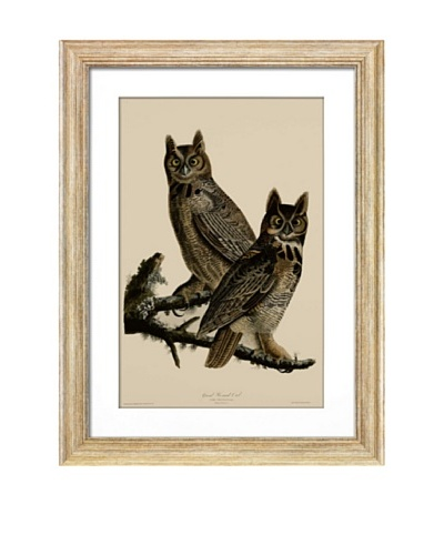 Great Horned OwlAs You See