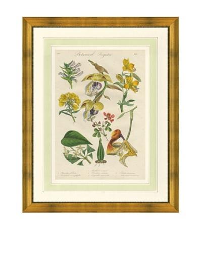 1837 Antique Hand Colored Yellow Botanical Print IX, French Mat