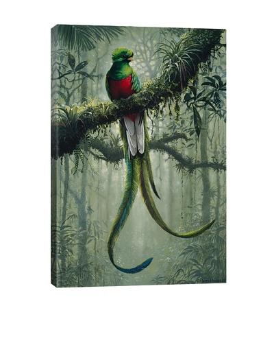 Resplendent Quetzal 2 by Harro Maass Giclée on Canvas