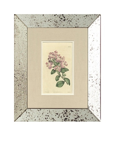 1813 Antique Hand Colored Pink Botanical V, Mirror Frame